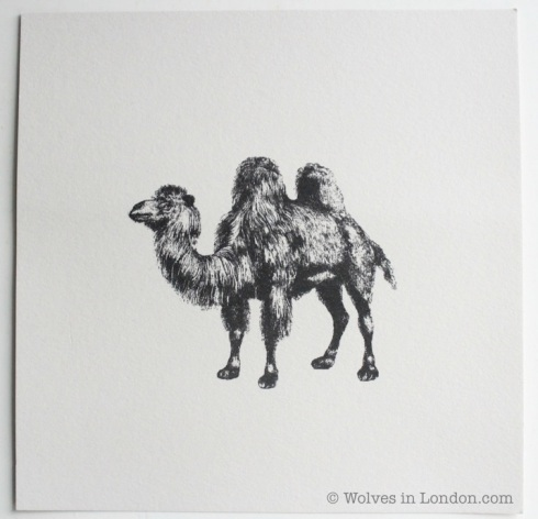 Camel card by Wolves in London