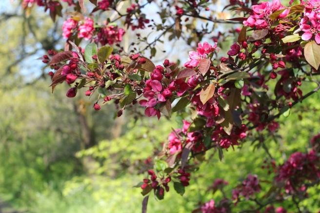 Blossom, Peckham Rye Park