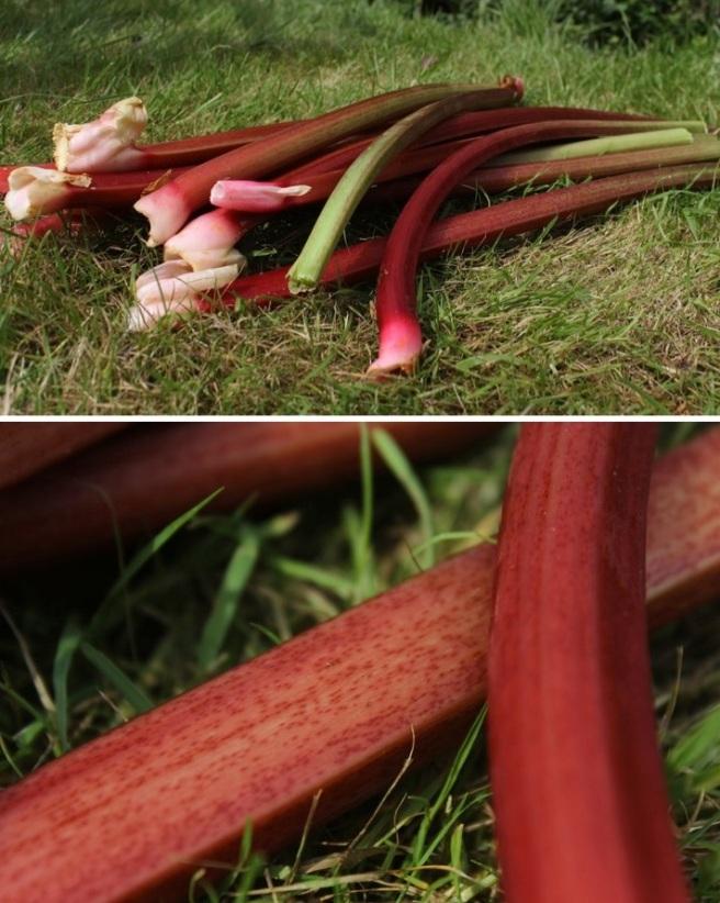 Homegrown rhubarb
