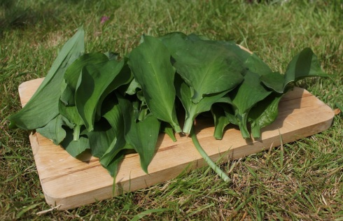 wild garlic leaves