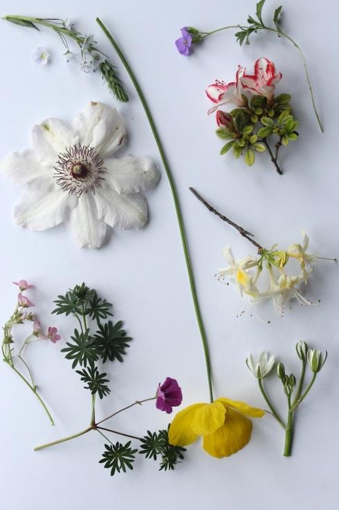 June garden moodboard