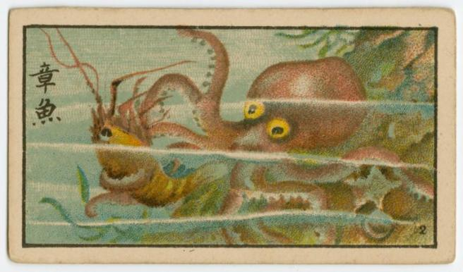 Octopus cigarette case