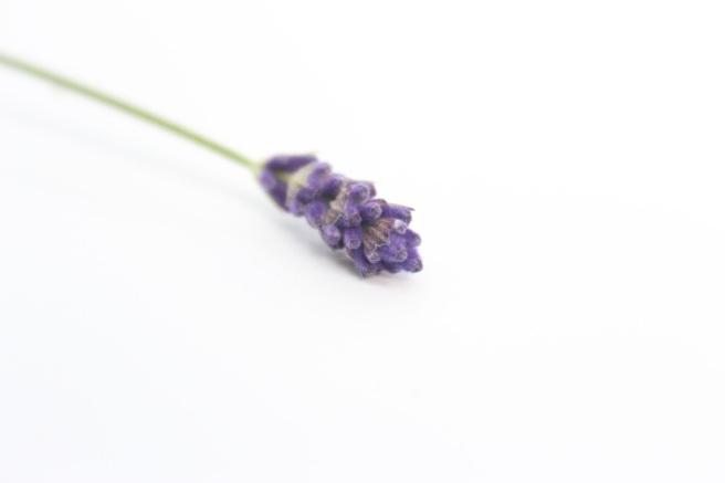 Lavender spike
