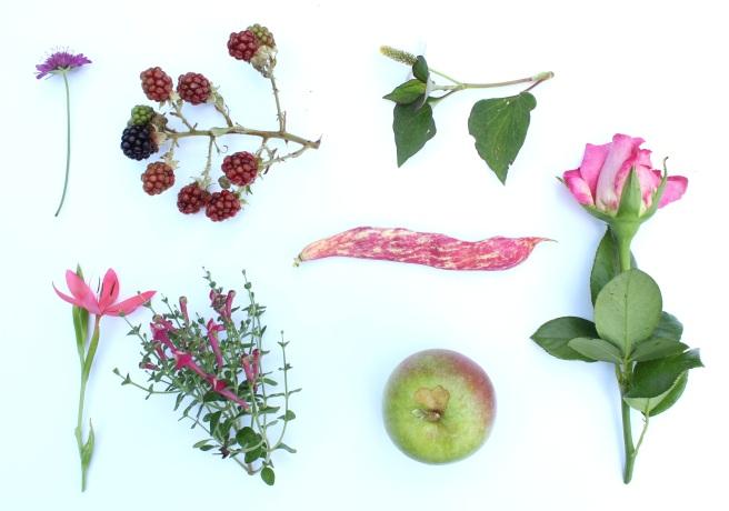 Garden moodboard August
