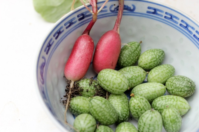 Cucamelons and radishes