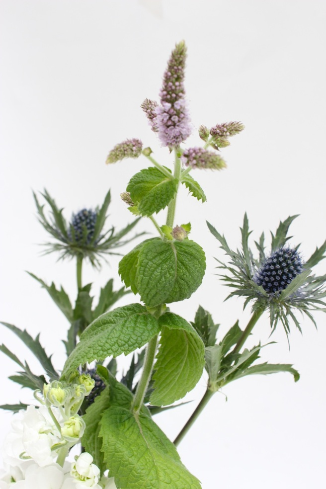 Thistle, flowering mint and stocks