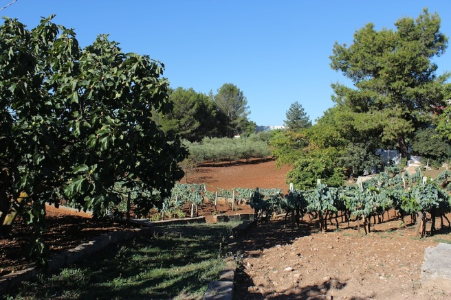 Puglia farming