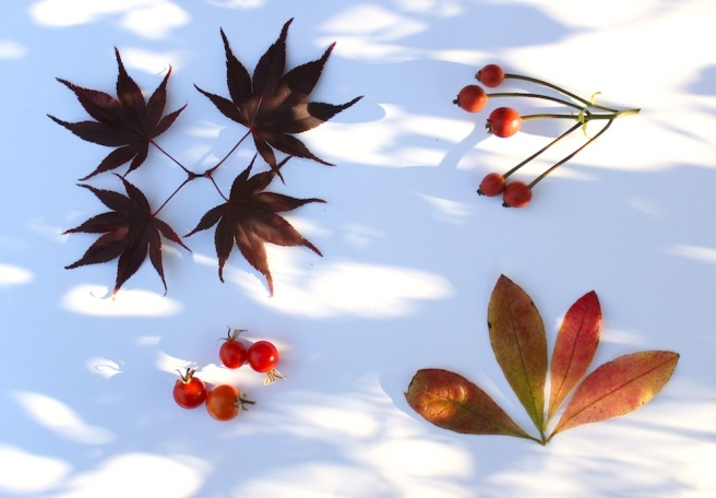 November garden moodboard