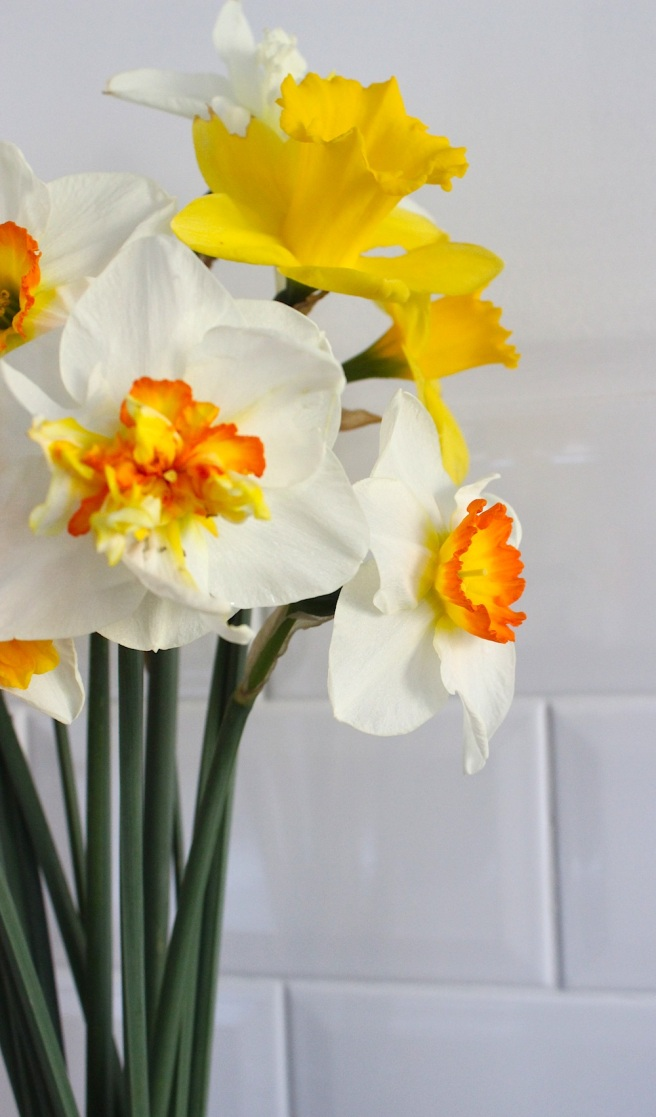 Daffodil bunch | Wolves in London