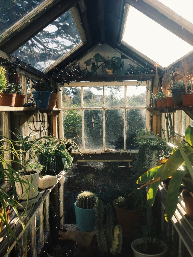 Cactus greenhouse with fairylights
