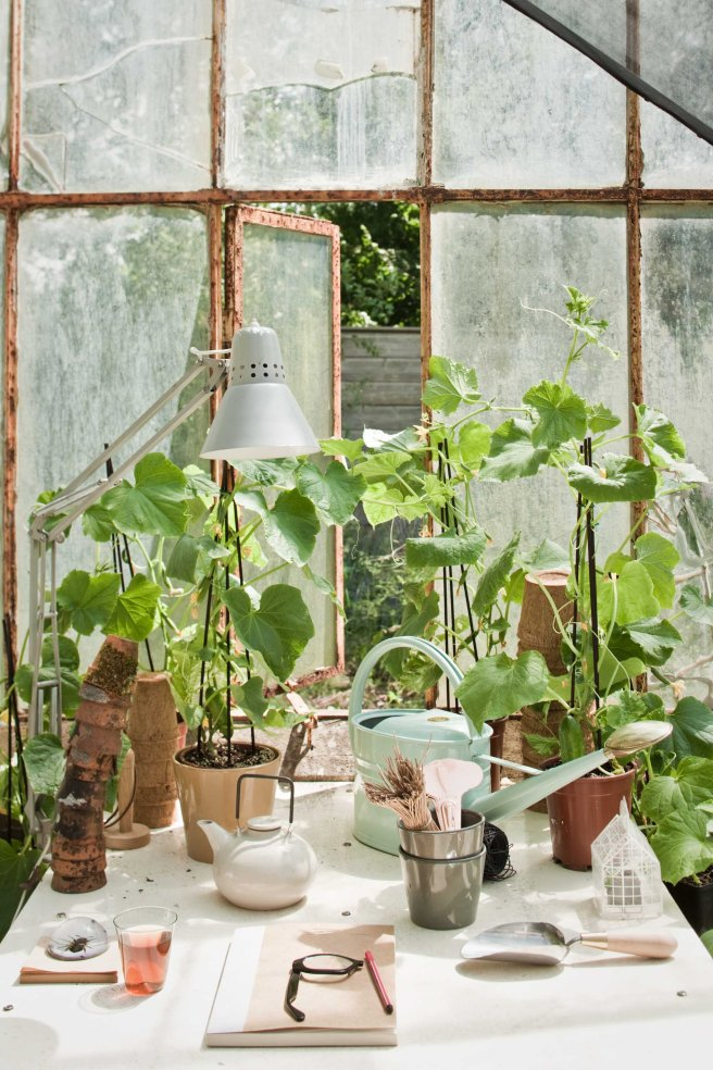 Greenhouse full of plants