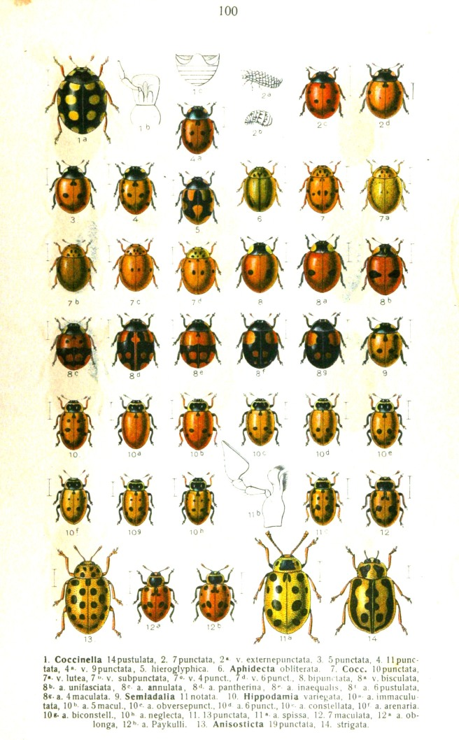 Ladybirds from Vintage Printable