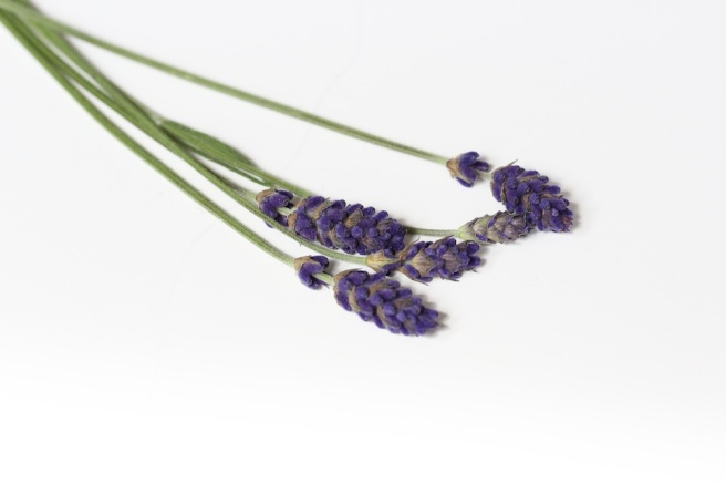 Lavender | Wolves in London