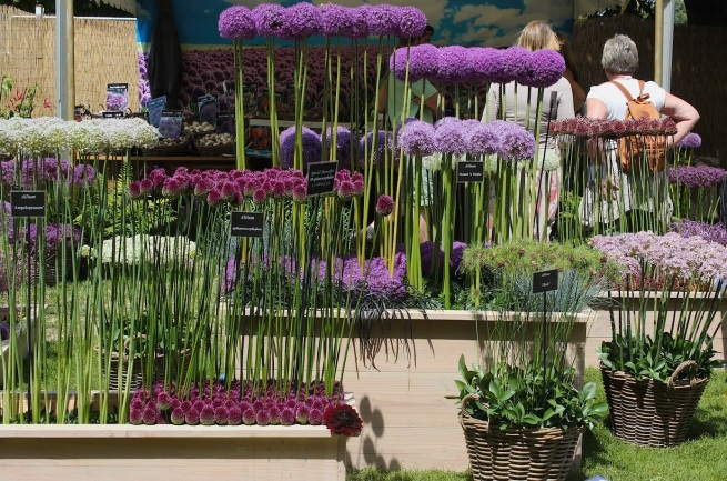 Allium stall at Hampton Court show | Wolves in London