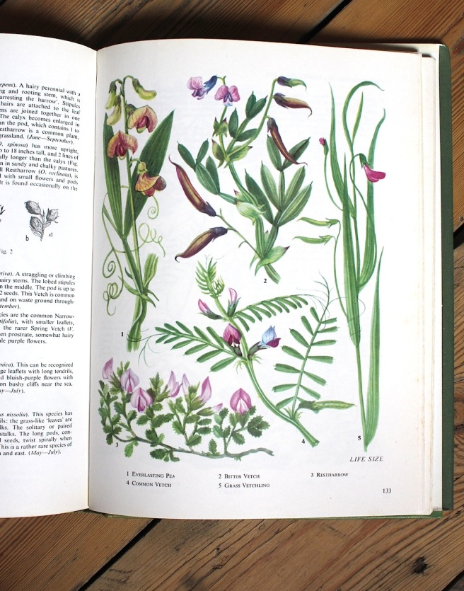 Wild flowers illustrations