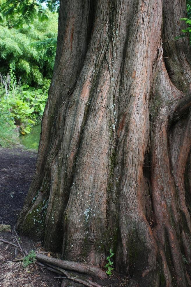 Tree trunk   Wolves in London