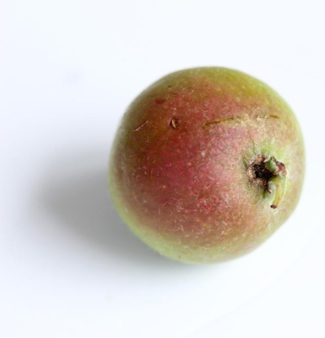 Unripe apple | Wolves in London