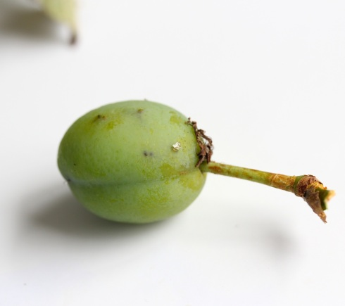 Unripe plum | Wolves in London