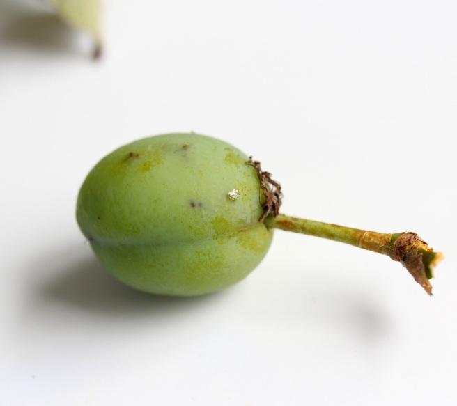 Unripe plum | Wolves in London