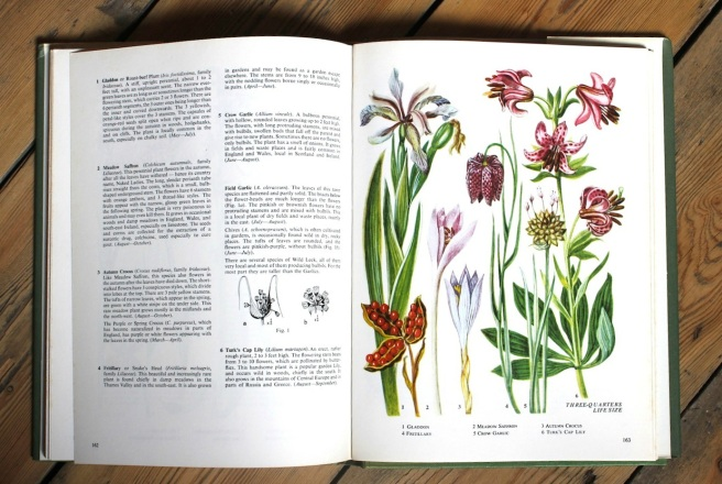 Illustrations of wild flowers | Wolves in London