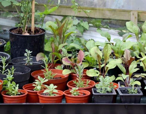 Tray of seedlings | Wolves in London