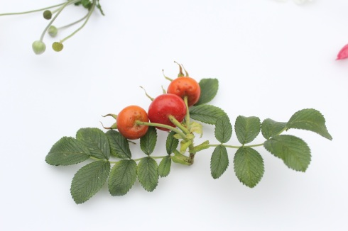Rosa rugosa rose hips | Wolves in London
