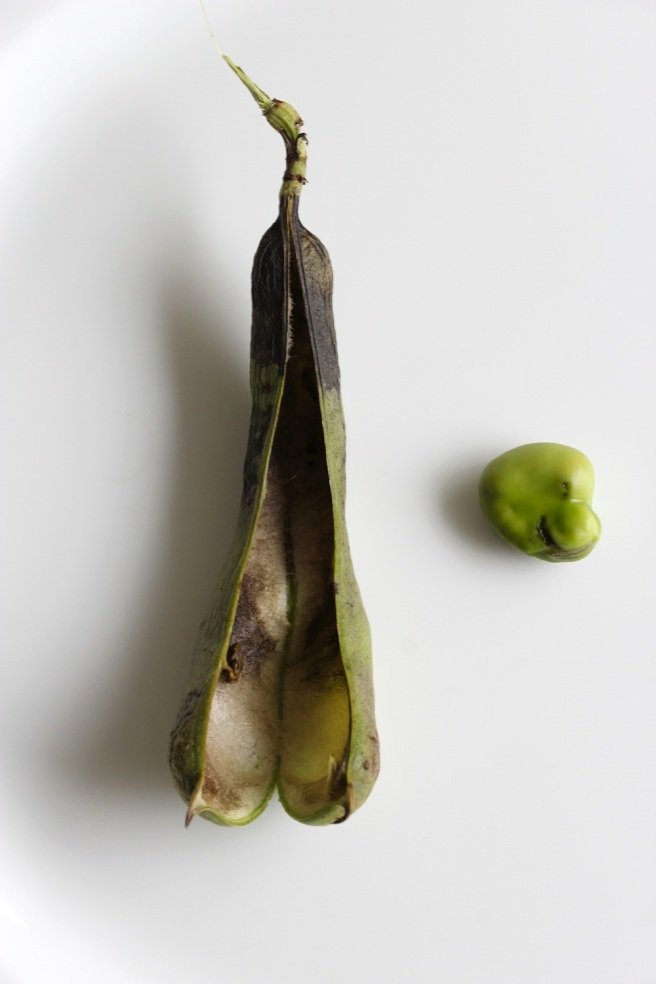 Single broad bean | Wolves in London