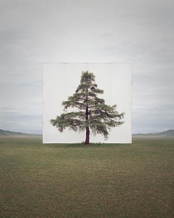 Myoung Ho Lee trees