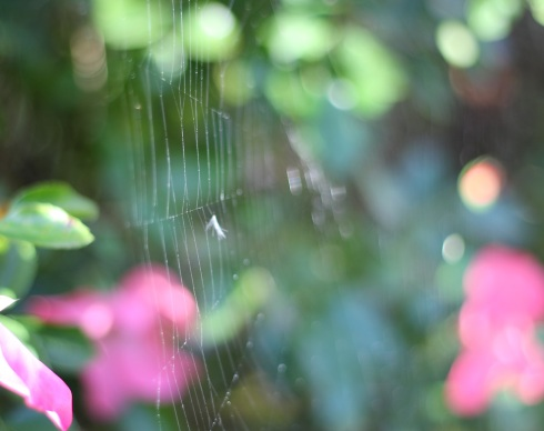 Garden cobweb | Wolves in London