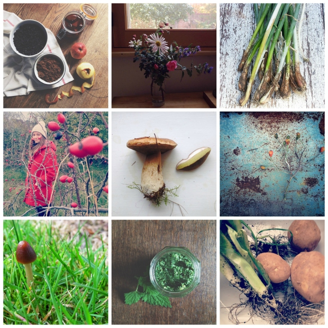Grow, forage, cook November round-up | Wolves in London