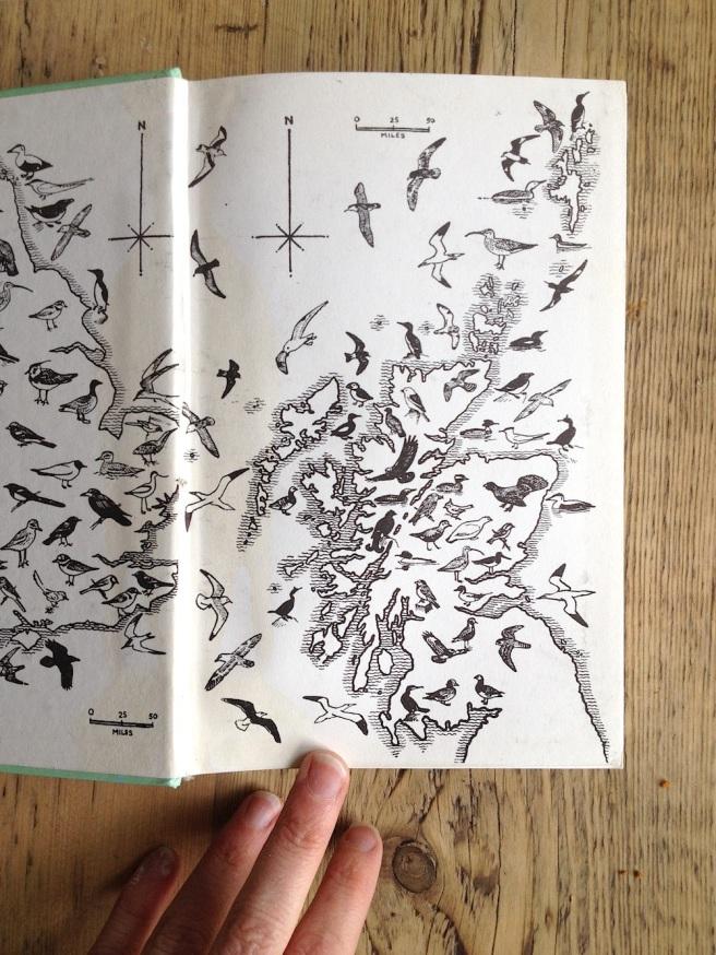 bird book inside