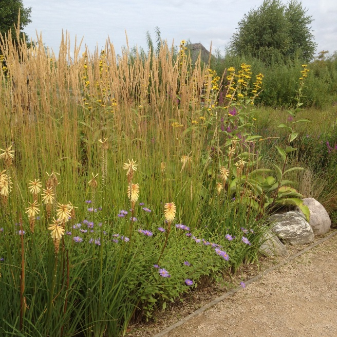 Summer planting at London Wetland Centre