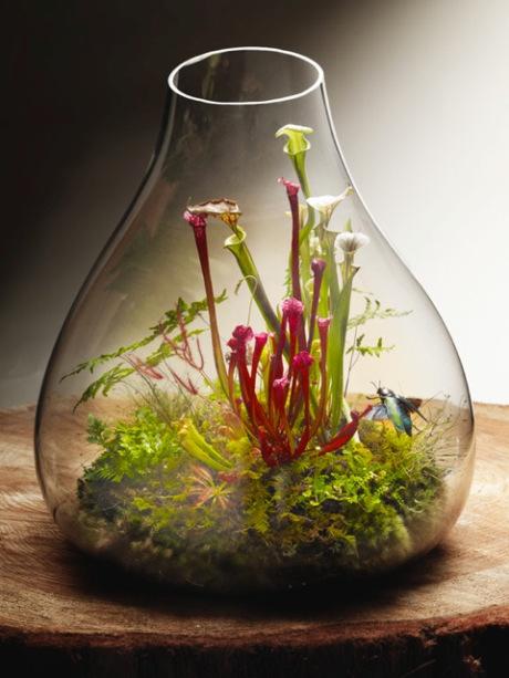 Pitcher plant terrarium