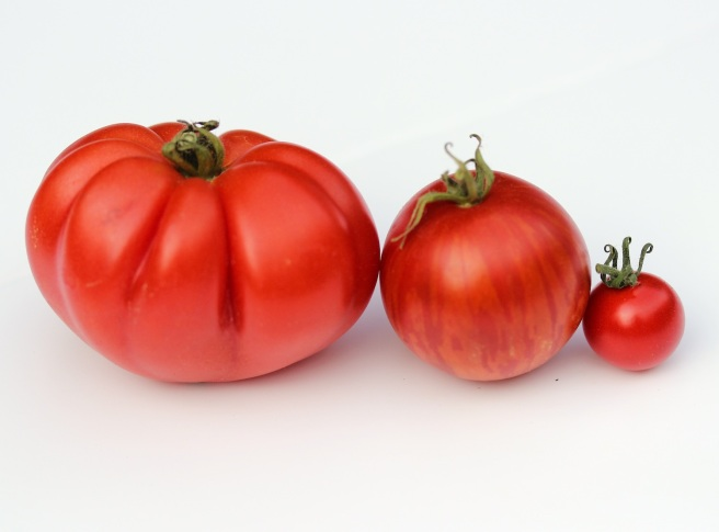 Three tomato varieties