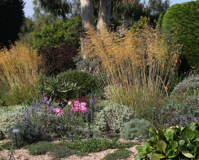 Contrasting foliage texture at Beth Chatto's gravel garden