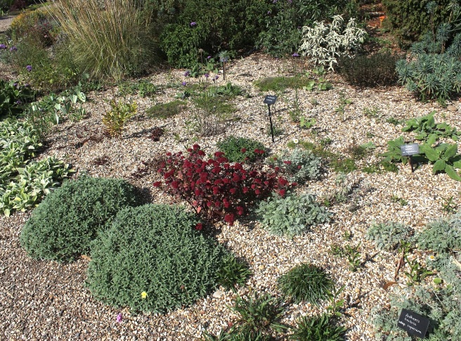 Planting space: Beth Chatto's gravel garden