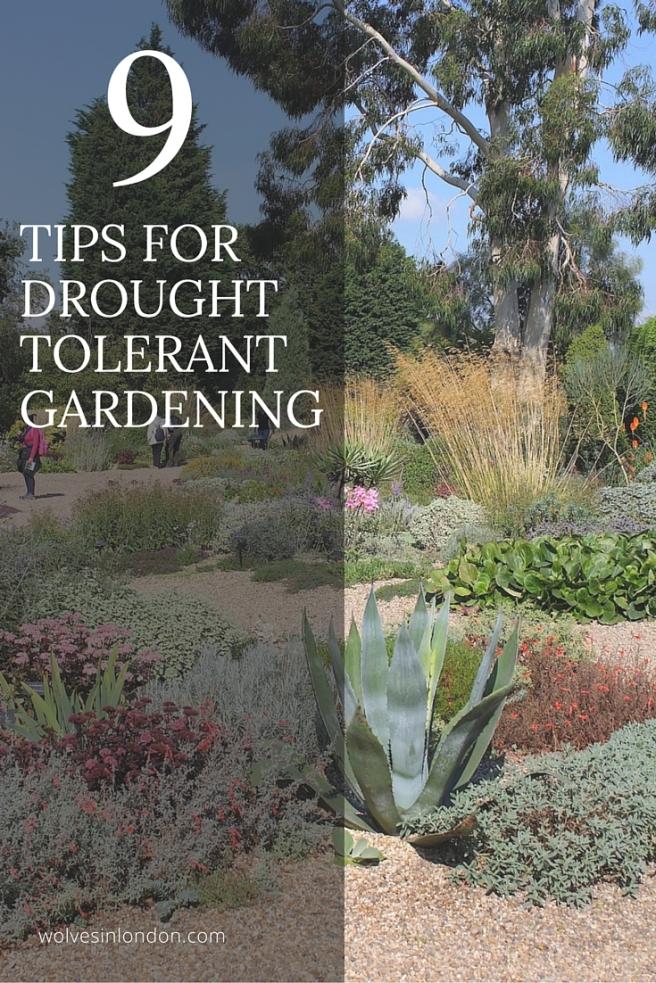 tips fordrought tolerant gardening