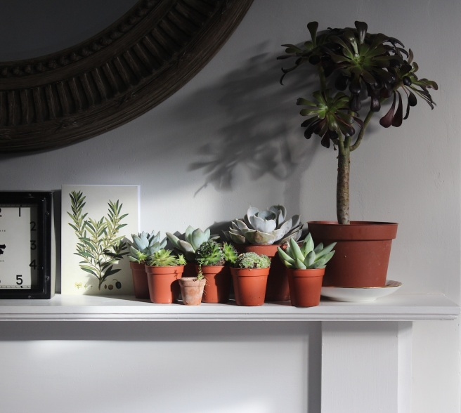 Wolves in London plant shelfie