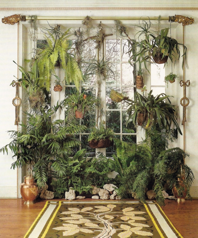 Ways To Decorate With Plants: Over On Pinterest: Houseplant Heaven