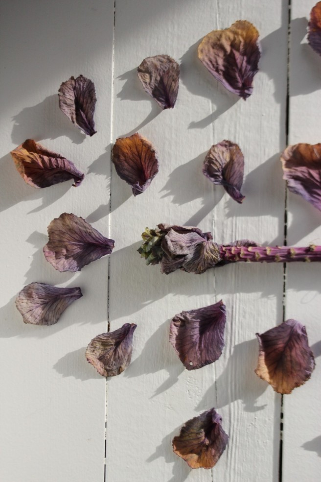 Deconstructed cabbage flower
