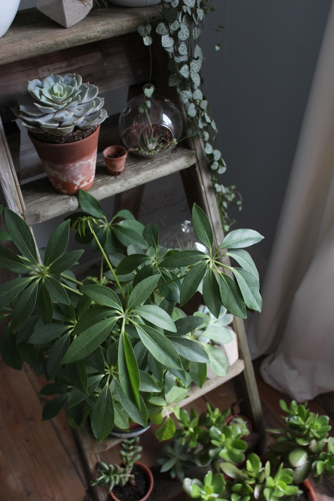 Houseplant ladder | Wolves in London