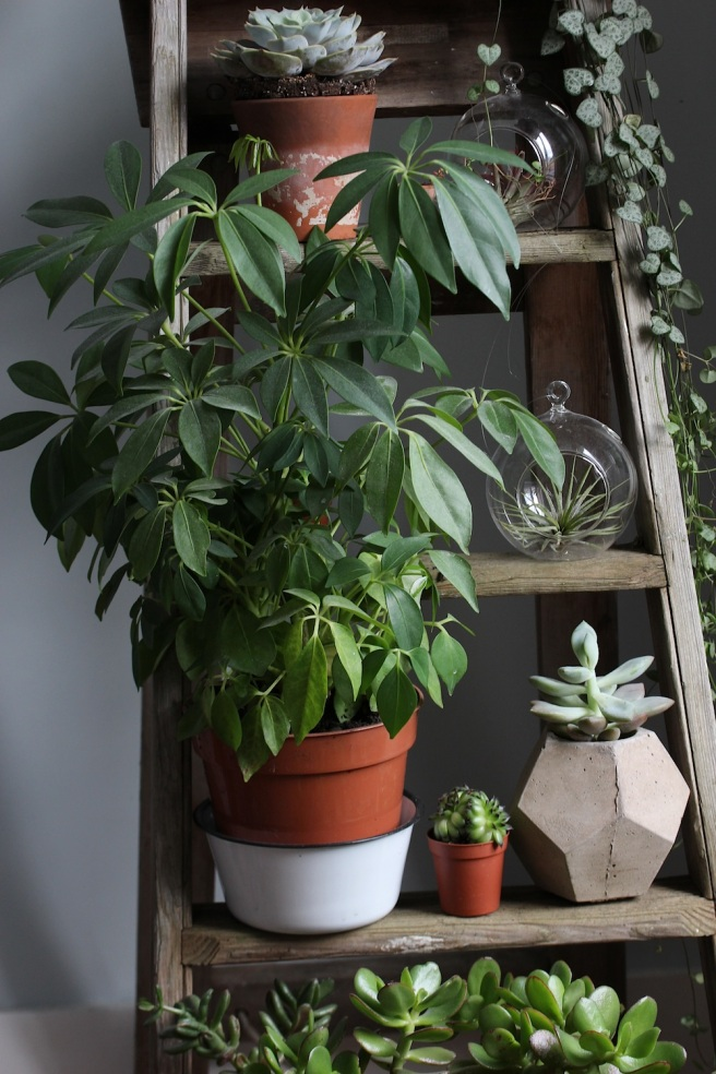 Houseplants | Wolves in London