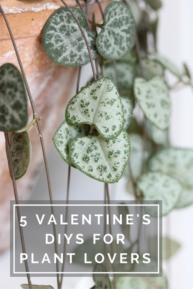 5 Valentine's Day DIYs perfect for plant lovers | Wolves in London