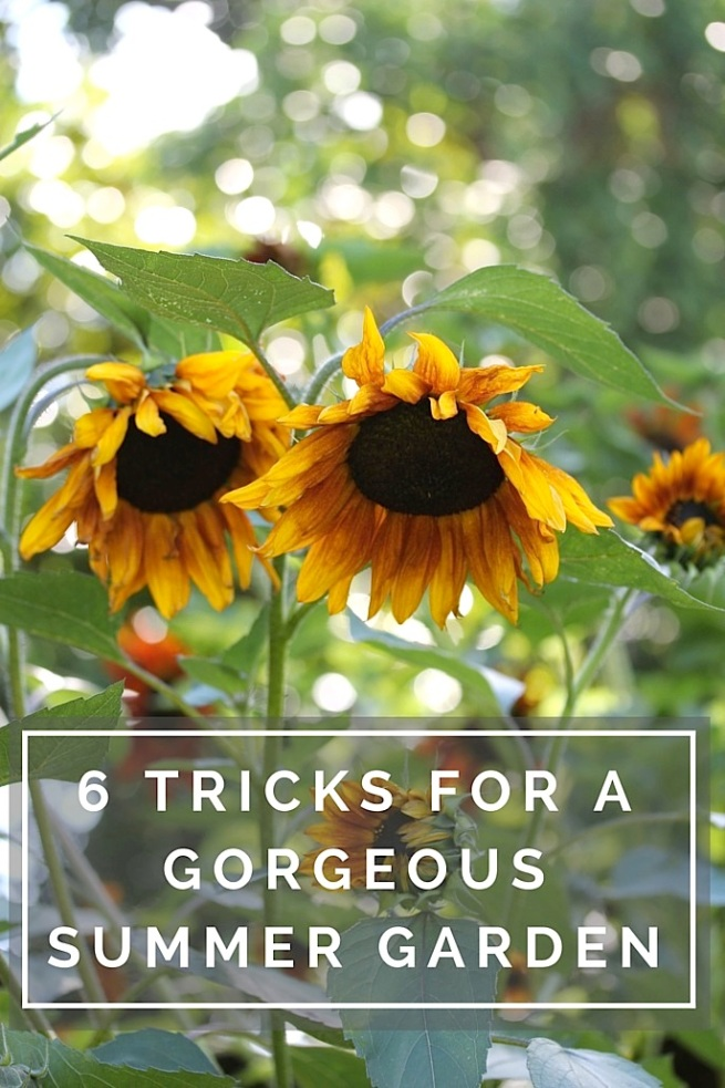 6 tips for a summer garden update