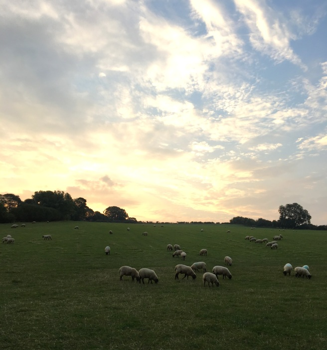 Sheep field, Cotswolds, UK