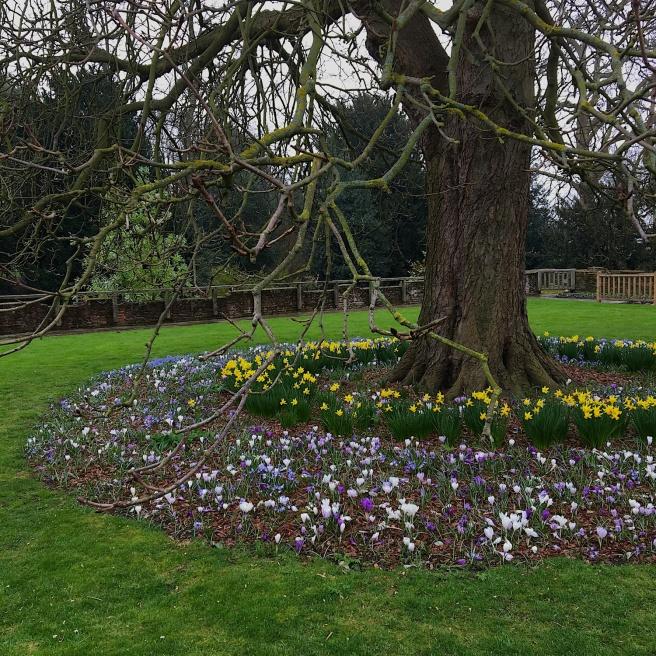 Spring at Eltham Palace