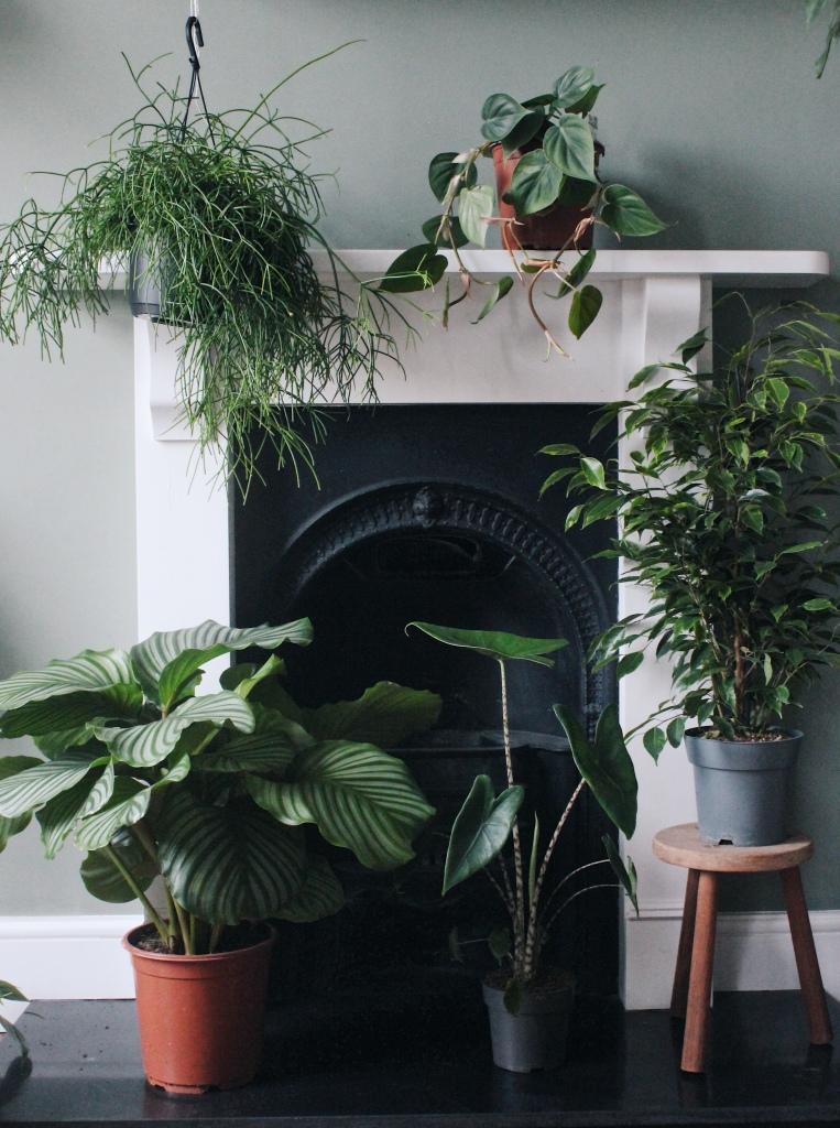 Statement plants box
