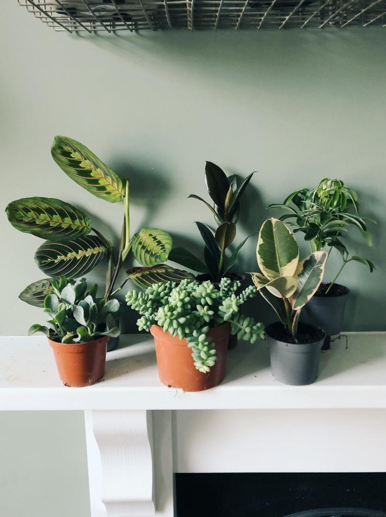 Baby plant box