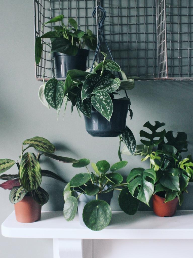 Great plants box