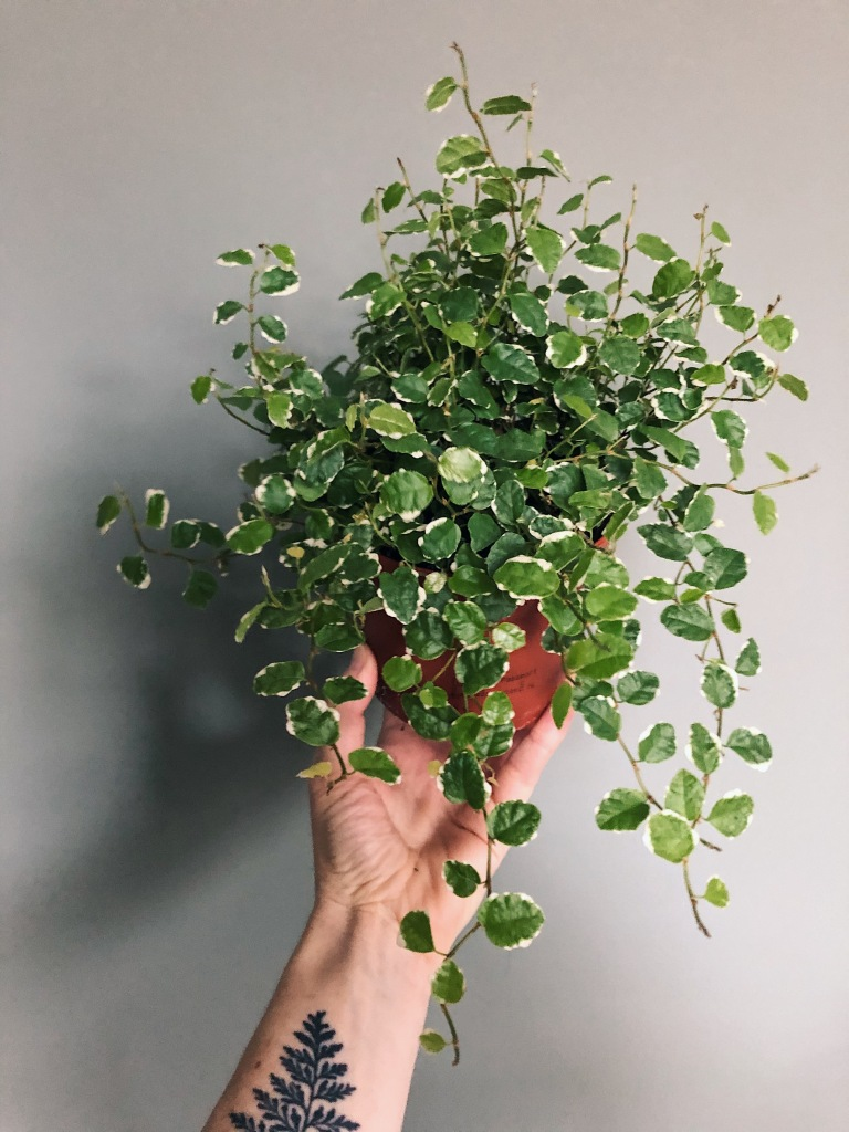 Individual plants